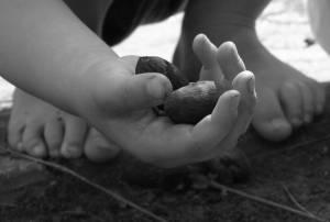 pecan hands