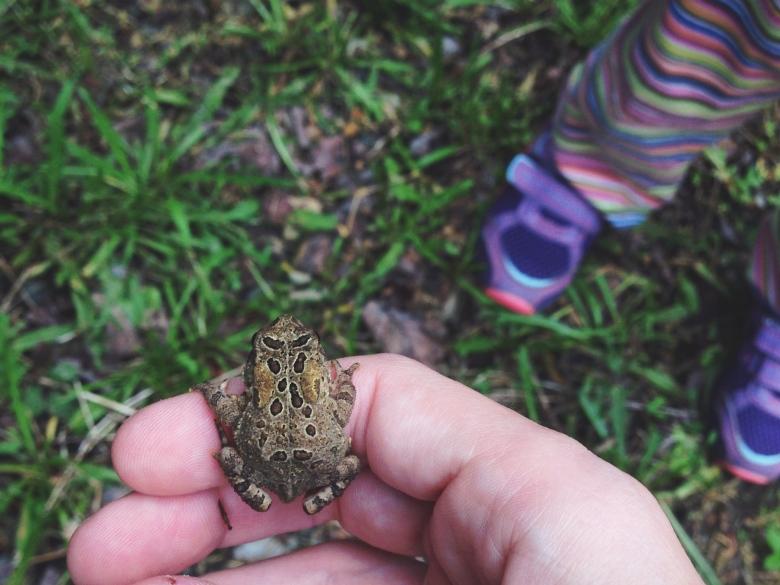 tiny frog, tiny toes